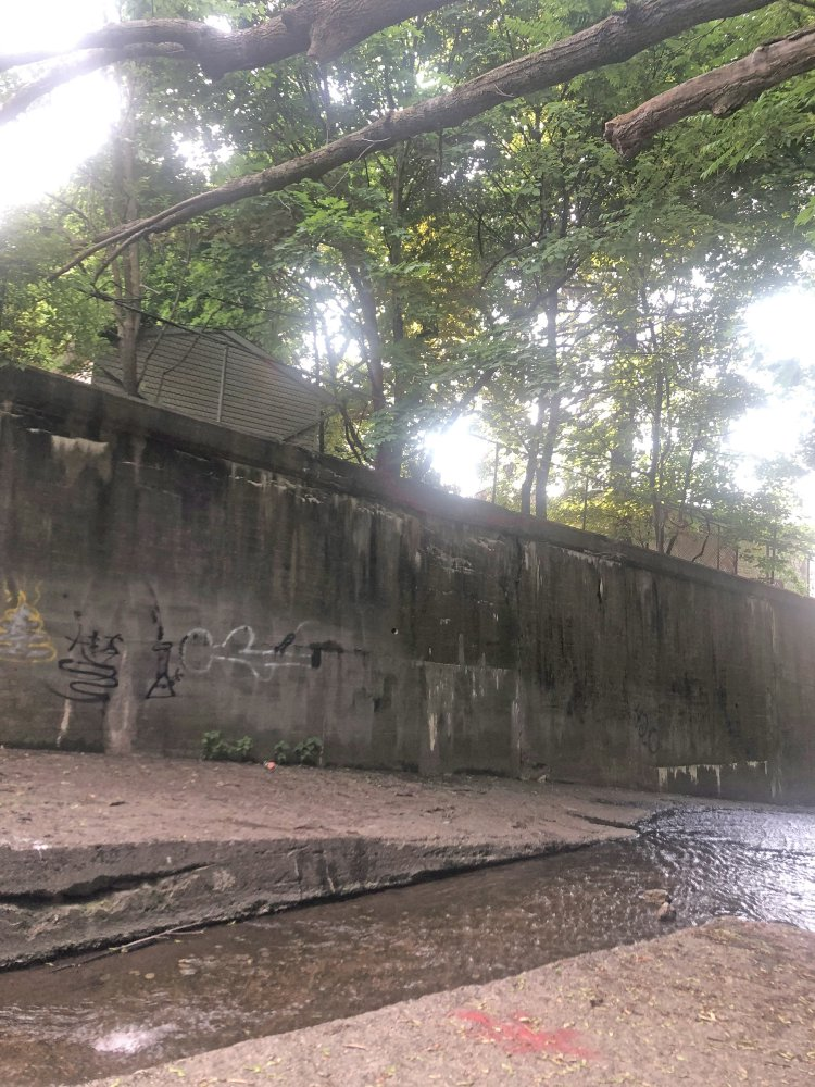 <p>June 21, 2020 - Branches where the noose was minutes before residents cut it down, with spot painted in the foreground</p>