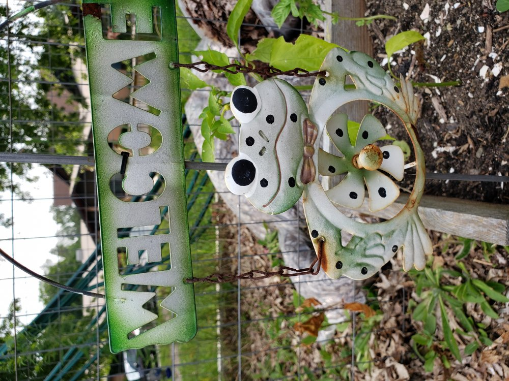 <p>Look closely and you can find a touch of whimsy, like decorative frogs, in beds at the Garden of Edin community garden.</p> <p></p>