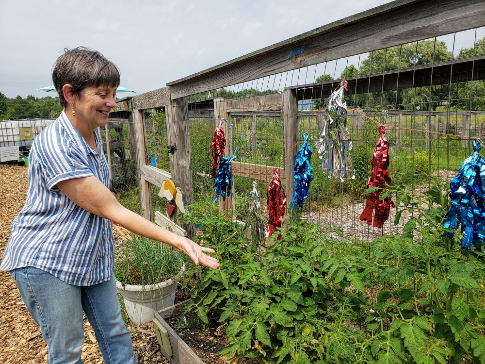 """<p><span style=""""text-decoration: line-through;""""></span>Botanist Heather Zimmerman, volunteer manager at the Garden of Edin, shows how the fencing around the garden plots serves a double purpose. It protects plants from deer and also works as a trellis.</p> <p></p>"""