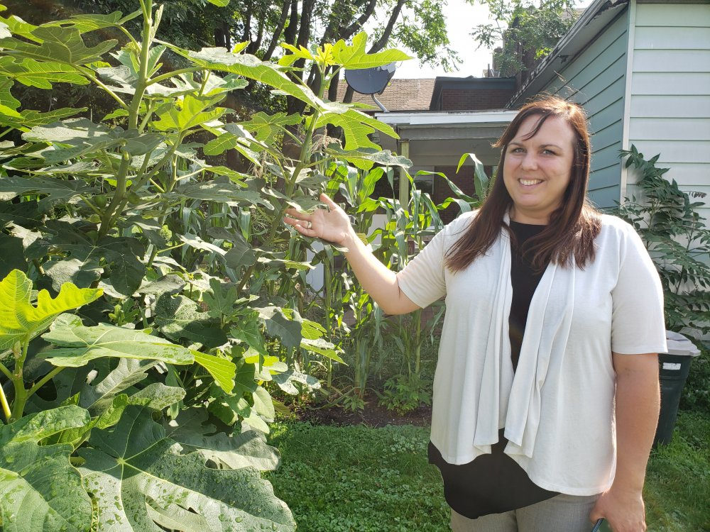 <p>Figs, a favorite food for Italian families, grow in an orchard on West 16th Street, close to St. Paul Catholic Church. Gretchen Gallagher Durney, neighborhood manager for the SSJNN, said the figs should be ripe and ready for market soon.</p> <p></p>