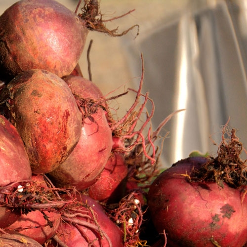 Smart Food: Get with the Beet by Helen Agresti