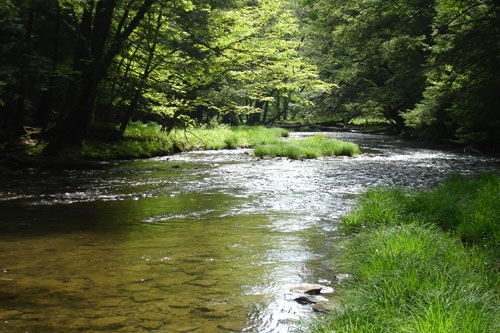 Disease and Distrust in the Allegheny Forest by Mary Birdsong
