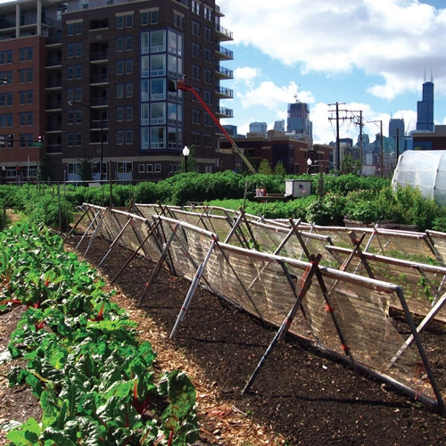 The Future of Farming in the City by Carrie Sachse