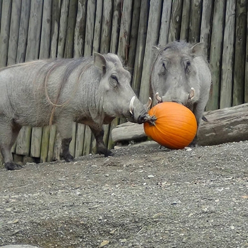 Spook-tacular Fun: Erie Zoo's Annual Event Creeps Up on Us by Mary Birdsong